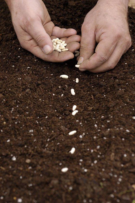 пол посадить семя картинка заднего отбойника газели